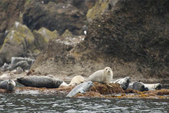 自然写真家、寺沢孝毅とともに『海鳥の楽園』小さな地球・天売島を体感!