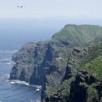 断崖絶壁に囲われた天売島。ウトウなど約100万羽の海鳥が生息しています